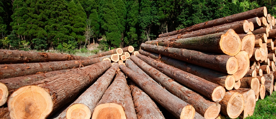 Timber Procurement Policy